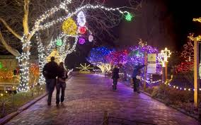 winter garden aglow home design inspirations