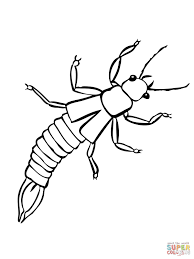 earwig insect coloring page free printable coloring pages