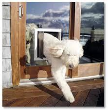 Exterior Cat Door Door With Pet Door And Other And Cat Door Solutions