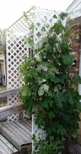 the story of our grape arbor tells you how to make this simple
