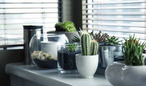 save space u0026 go green with a succulent garden