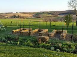 aqha straw bale gardening tips