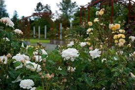 Garden Family Highline Seatac Botanical Garden