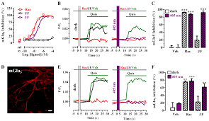 optical control of pain in vivo with a photoactive mglu5 receptor