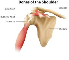 stay current when reporting shoulder procedures aapc knowledge