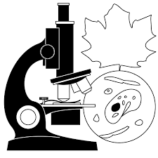 animated science free download clip art free clip art on
