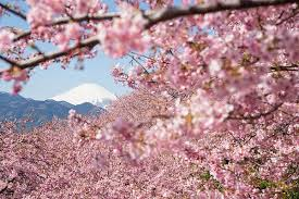 blossoms evolving meaning