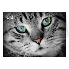 grey and white cat greeting cards zazzle
