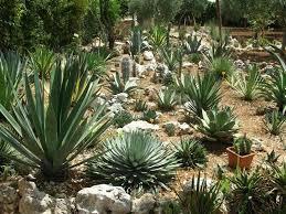 giardini rocciosi in ombra fiori per giardino roccioso idea creativa della casa e dell