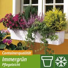 balkon blumen balkonblumen sommerblumen kaufen bei ahrens sieberz