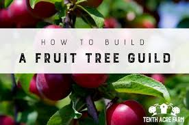 Fruit Tree Garden Layout How To Build A Fruit Tree Guild Tenth Acre Farm