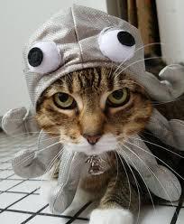 Cat Halloween Costumes Cats Cat Diy Halloween Costumes Brit
