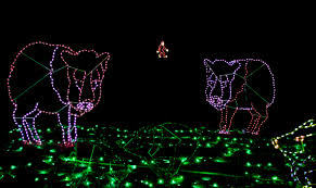 phoenix zoo lights 2016 laura u0027s palette