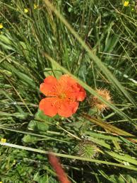 native uk plants plants botanical
