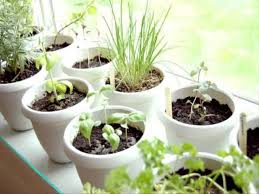 inside herb garden small home indoor herb garden ideas youtube