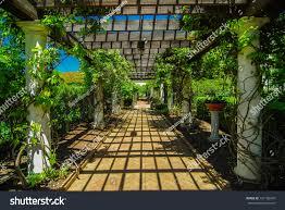 garden lattice walkway stone pavers vine stock photo 137106347