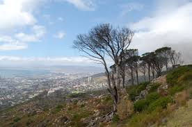 Table Top Mountain by File Table Top Mountain Cape Town Jpg Wikimedia Commons