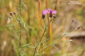 wa native plants washington state noxious weed control board