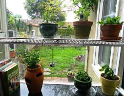 inside herb garden diy indoor herb garden ideas