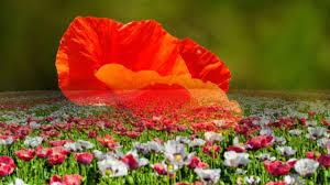 beautiful nature images hd nature beautiful flowers nature