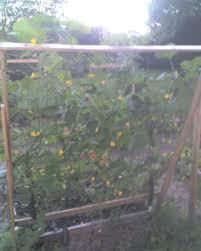 cucumber trellis idea