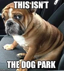Funny Meme Dog - image tagged in bad pun dog dog funny memes funny dog memes funny