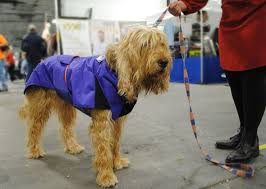 Dog Show Thanksgiving Day Best 20 National Dog Show Ideas On Pinterest