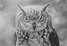 how to draw an owl u2014 art by nolan