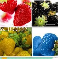 online get cheap strawberry garden plantes aliexpress com