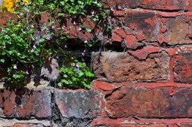 red brick garden wall plants stock photo image 77385016