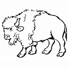 printable coloring contest for tupelo buffalo park and zoo