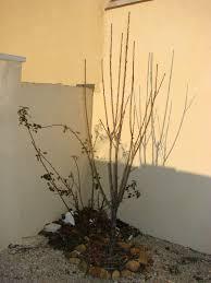 Abris De Jardin Cerisier by Arbres U0026 Arbustes Ornementaux Au Jardin De Dzprod Archives