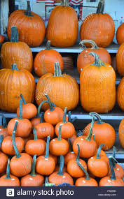 sale halloween decorations promotion shop for promotional sale