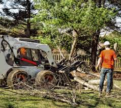 top local tree care service companies near me tree removal