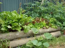 vegetable garden layout raised designs home design ideas