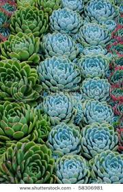42 best succulents images on pinterest gardening plants and