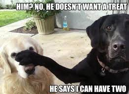Funny Animals Meme - lol funny meme funny animals gallery 3