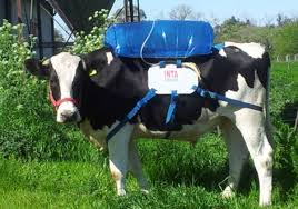 could less gassy livestock be a cash cow bloomberg