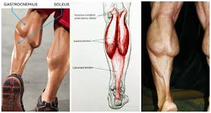 Simple Calf - 6 simple for crafting bigger calves fitness and power