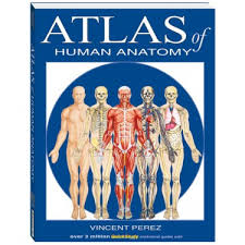 Human Anatomy And Physiology Textbook Online Nursing Books U0026 Textbooks Online Anatomy U0026 Physiology Enurse