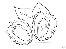 lychee cross section coloring page free printable coloring pages