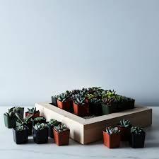 How To Make A Succulent Wall Garden by Diy Vertical Succulent Garden On Food52