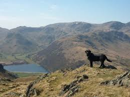 Dog Friendly Cottages Lake District by Pet And Dog Friendly Holiday Accommodation Book Your Holiday Directl