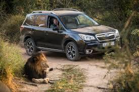 tan subaru epic drive 2014 subaru forester 2 0xt premium in south africa