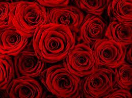 wallpaper bunga lingkaran wallpaper bunga bunga merah simetri pola tekstur lingkaran