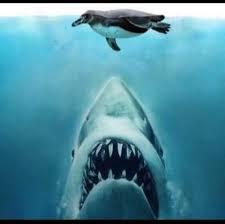 San Jose Sharks Meme - 129 best san jose sharks images on pinterest san jose sharks