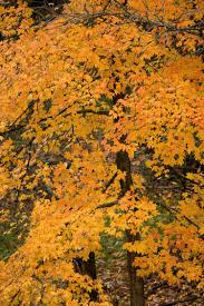 shades of orange colour fall colors mdc discover nature