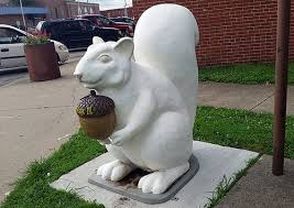 the white squirrels are almost everywhere in olney illinois
