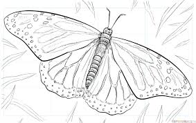 how to draw a monarch butterfly by drawing tutorials