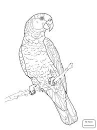 birds african with parrot parrots coloring pages for kids